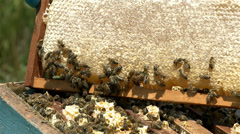 Bees in the hive after being moved Stock Footage