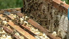 Honey extract - bee hive Stock Footage