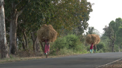 P03523 Rural Scene in India of Women Carrying Grass on Head Stock Footage