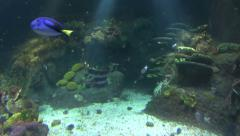 Underwater Scene Reef Scene With Fish Stock Footage