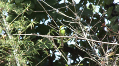 P03514 Green Bee-eater Bird in India Stock Footage