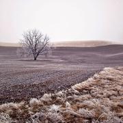 Tree growing in crop field in winter Stock Photos