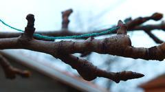 Litle branch - stock photo