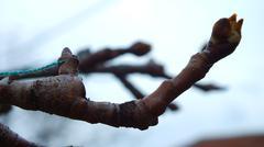 Branch - stock photo