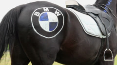 Horse with BMW logo on crupper at autodrome, joke, close-up, click for HD Stock Footage