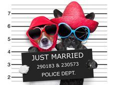 Just married mugshot Stock Illustration