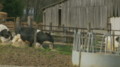 A line of cows walk past barn Stock Footage