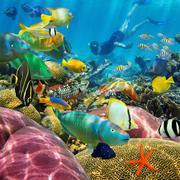 Mies vedenalainen koralliriutta ja trooppisia kaloja Kuvituskuvat