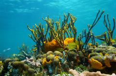 Underwater scenery colorful marine life coral reef Stock Photos