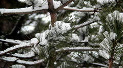 Snowy Branches. Winter Time. Stock Footage