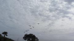 Pelicans In Flight Stock Footage