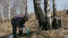Stock Video Footage of gathering birch sap