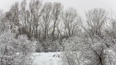 Stock Video Footage of snowfall