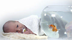 Baby looks the fishes which swim in the aquarium in slow motion - stock footage