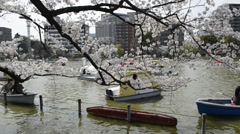 Hanami cherry blossom viewing at Ueno Park, Tokyo, Japan - stock footage