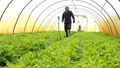 Farmer jogging in greenhouse ,Arugula aka Rocket,organic Rucola in greenhouse Stock Footage