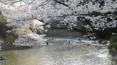 Hanami cherry blossom viewing at Chidorigafuchi, Tokyo, Japan Stock Footage