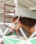 brown horses eating silage - stock photo