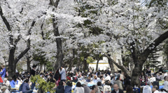 Hanami cherry blossom viewing at Ueno Park, Tokyo, Japan Stock Footage