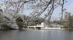Hanami cherry blossom viewing at Inokashira Park, Tokyo, Japan Stock Footage