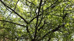 Horror shot of tree Stock Footage