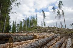 logpile at a clear cut area - stock photo