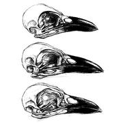 Crow Skull - stock illustration