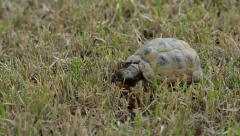 Turtle on grass Stock Footage