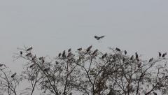 Birds standing on treetop Stock Footage