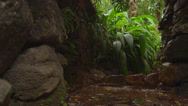 Stock Video Footage of Water dripping from the stone structure in Botanico Jardin