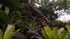 Bank plants in Botanico Jardin, Rio Stock Footage