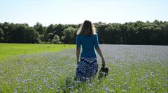Woman walk through blue cornflower agricultural field in summer Stock Footage