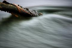 Mossy branch in the river, small tide - stock photo