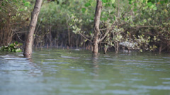Just above the surface of a swamp water Stock Footage