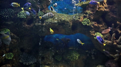 Marine aquarium floating fish in it Stock Footage