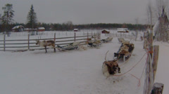Reindeer with sledges Stock Footage