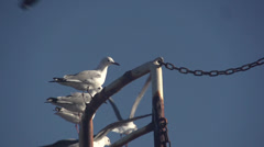 Seagulls fly in slow motion - stock footage