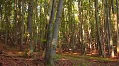 Trees In A Forest With Foliage On The Ground Stock Footage