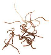 Worms on a white background. macro Stock Photos
