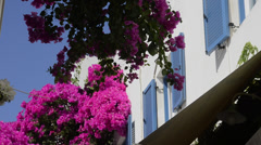 Stock Video Footage of Scenic with pink flowers in Santorini Greece in Greek Islands