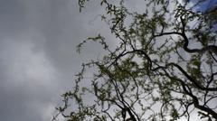 Clouds timelapse springtime-1 Stock Footage