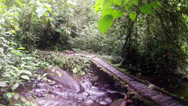 Stock Video Footage of Rain forest river HD