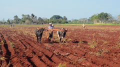 Trinidad Cuba farmer with traditional plow with oxen in rich Cuban soil planting Stock Footage
