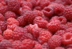 Stock Photo of Red Raspberry background