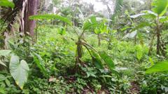 Amazonian vegetation, static shot - stock footage