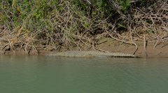Namibia Namibia crocodile relaxing on shore  on river called  Kunene River on Stock Footage