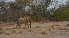 Namibia Namibia desert elephants wild in Uibasen Conservacy at river called Aba Stock Footage