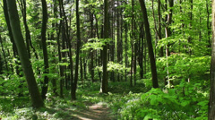 Deciduous forest - springtime  - stock footage