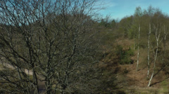 Panning shot of trees, wirral, England, circa 2014 april Stock Footage