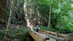 Muir Woods California CA above San Francisco wonderful giant Redwoods and Stock Footage